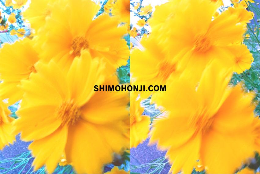 shimocomtop1.jpg